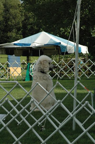 HONYASC DDS2008 Obedience