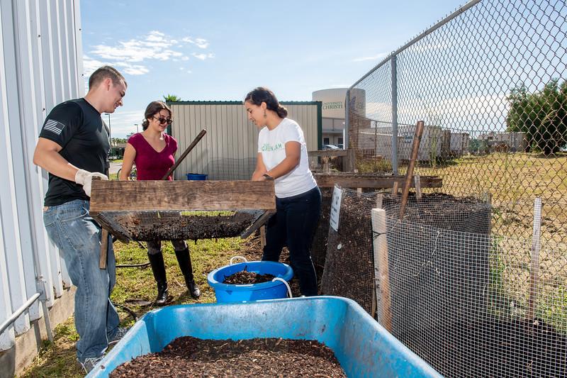 Students Mark Rolph (left), Christina Ballouz, and Melissa Zamora sift through compost at the Islander Green Garden.