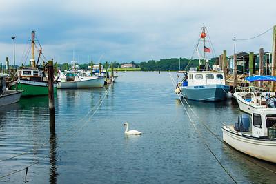Bristol Bay