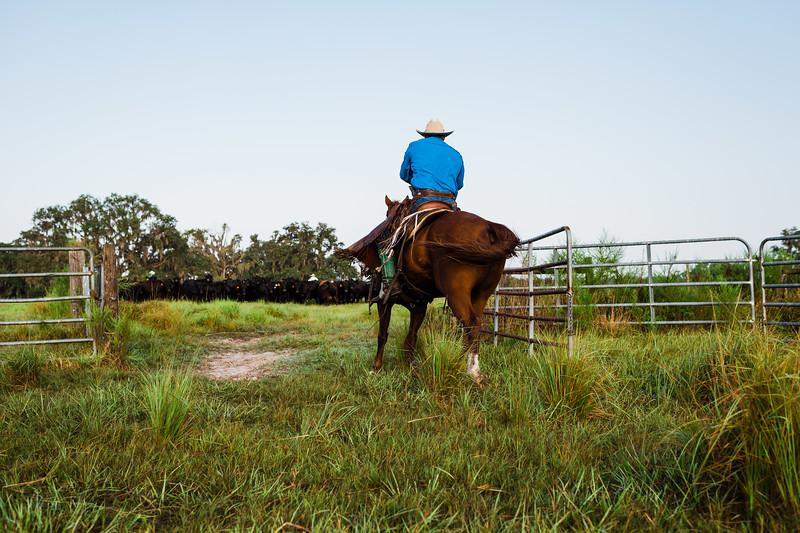 Barthle Cattle-2 (46 of 102).jpg