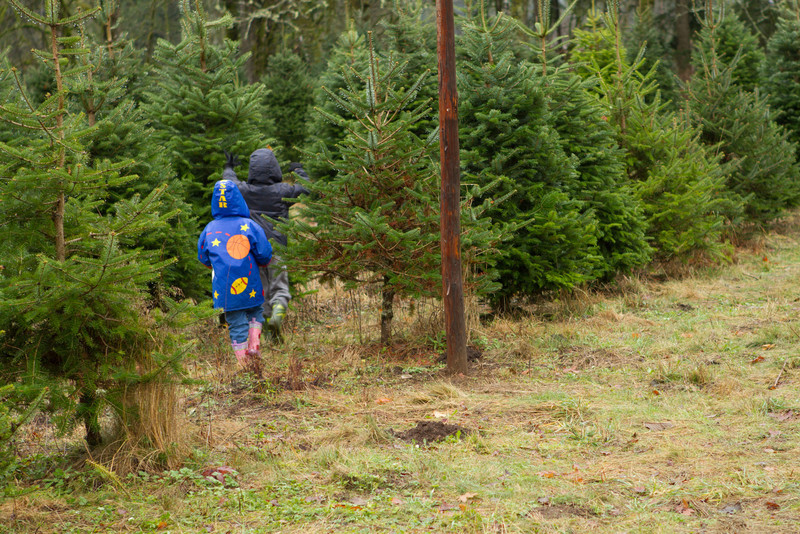 2012_ChristamsTree_Hunt-56.jpg