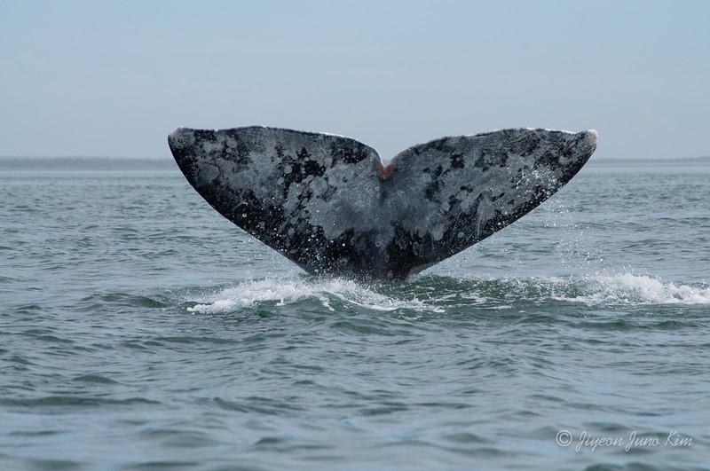 Mexico-Loreto-Whale-2414.jpg