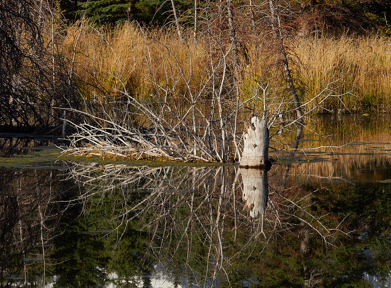 Reflections in beaver lake