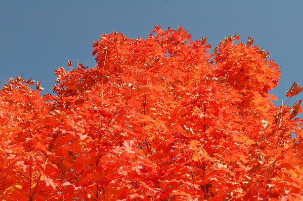 Fall Foliage Around Campus