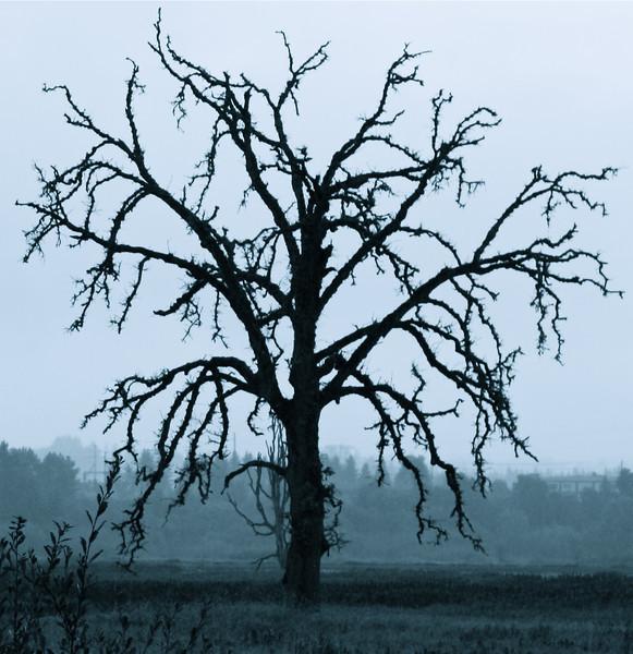 tree_12.jpg