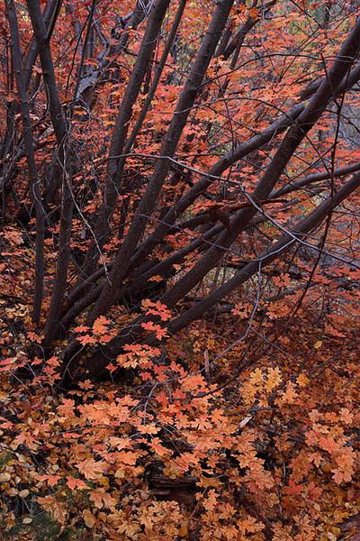 Zion_North_Creek_Subway_Fall_Foliage_3101.jpg