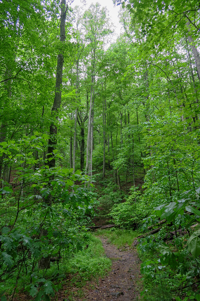 Lower Sidehill Trail -- 2,630'