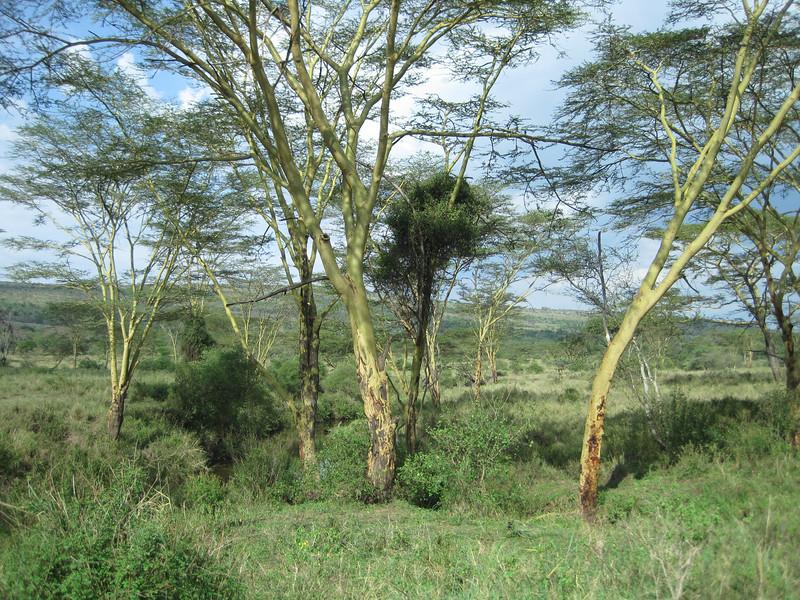 Tanzania14-3526.jpg