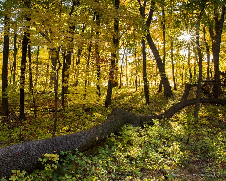 Fall Leaves_IMG_3727.jpg