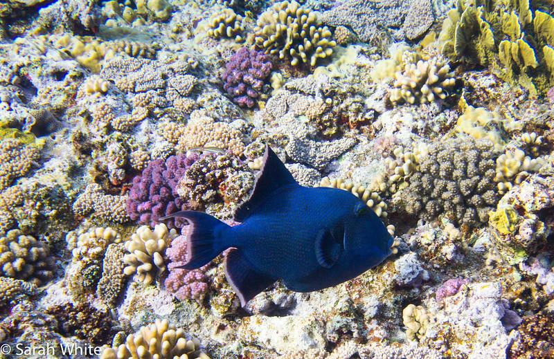 Project Shark 2013-12.jpg