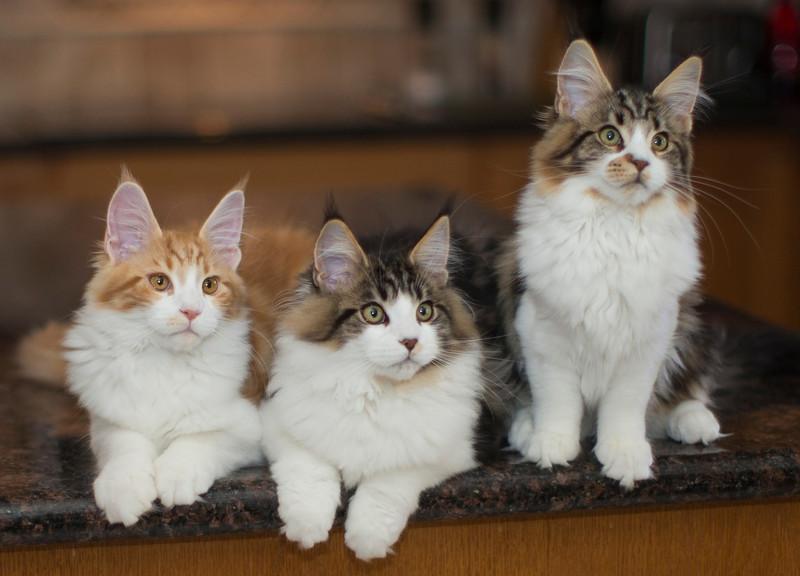 Kittens290.jpg
