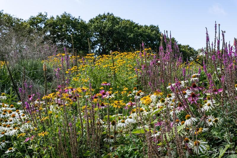 850_Sussex Prairie Gardens-8502656.jpg