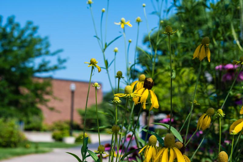 07_02_2019_Campus_Flowers_DSC_0139.jpg
