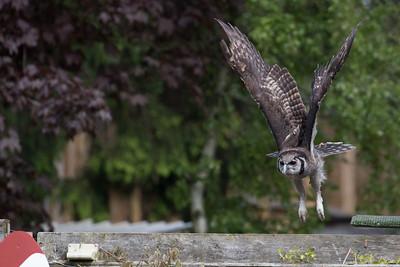 Hawk Conservancy Trust, Andover