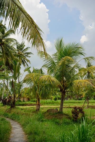 160217 - Bali - 2591.jpg