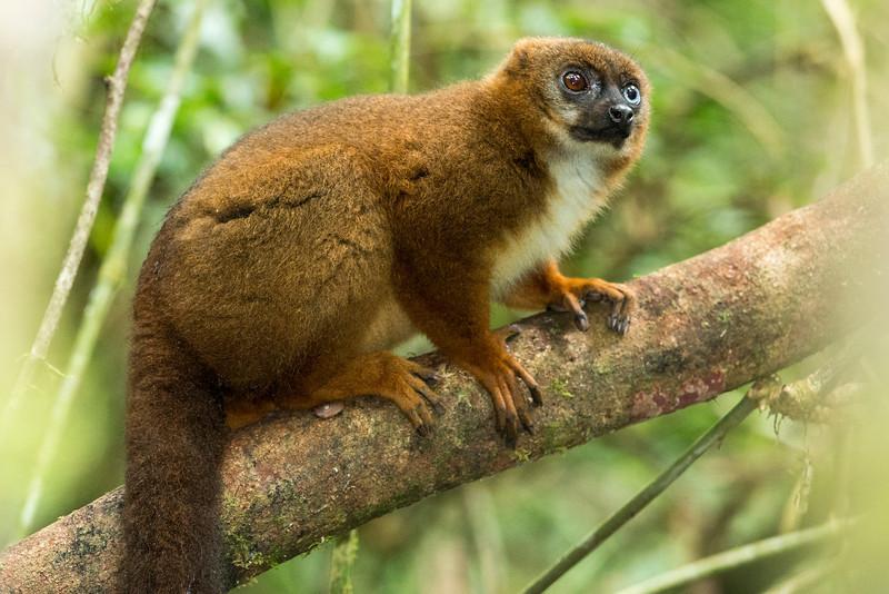 Madagascar_2013_FH0T0079.jpg