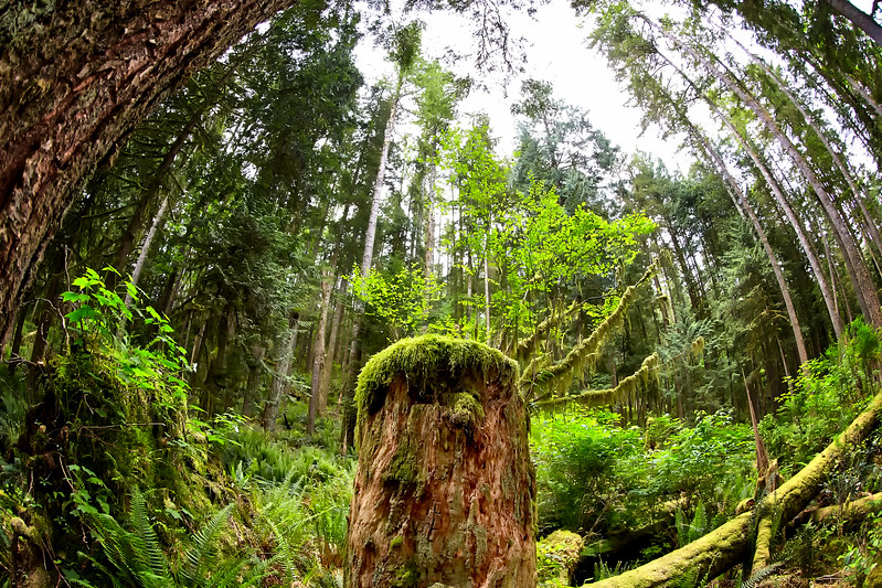 Rain Forest British Columbia