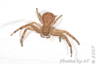 Macro Spiders