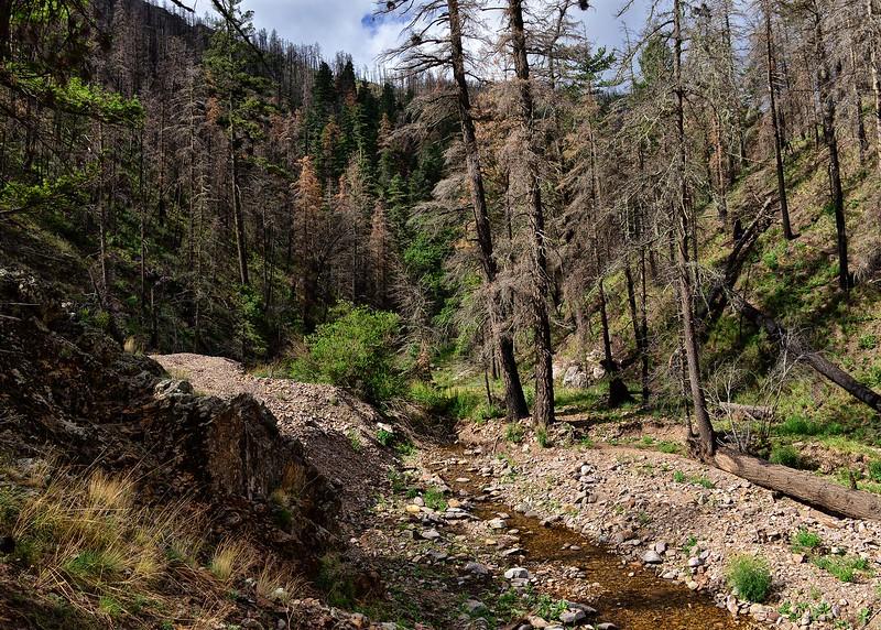 NEA_0382-7x5-Southfork Trail.jpg