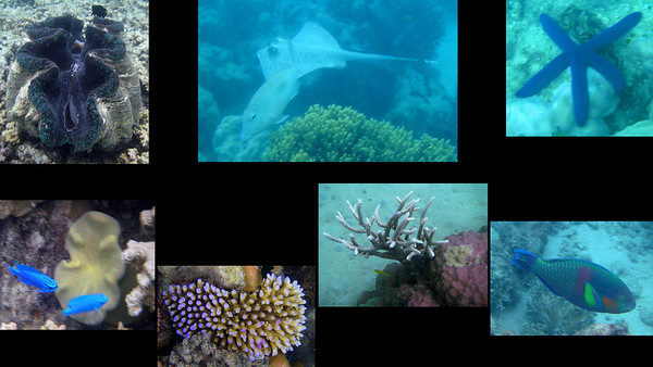2008 Australia, New Zealand, and Bora Bora