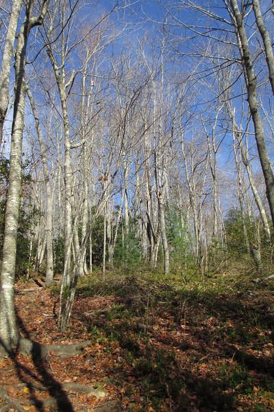 Little Green Trail - 3,900'