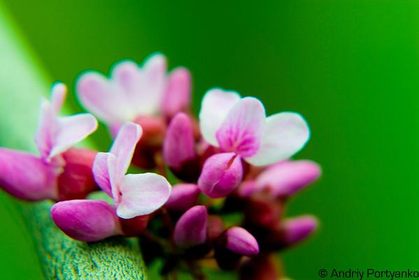 Spring10_1.jpg