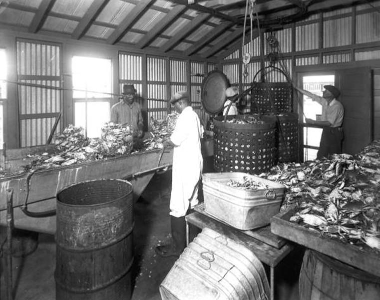 Market - 1939 - processing crabs.jpg