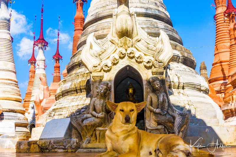 Canine guardian of the pagoda.