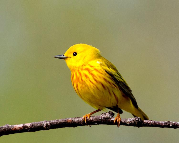 yellow22012.jpg