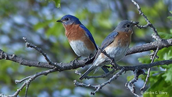 Bluebird Favorites 2015-2016