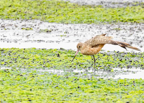 Birds of Monterey