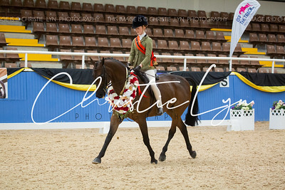 Class 5: Child's Large Show Hunter Galloway over 14.2 hh up to inc 15 hh
