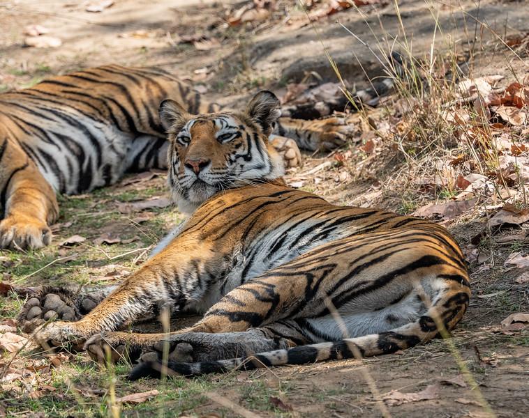 India_April_2019-819.jpg