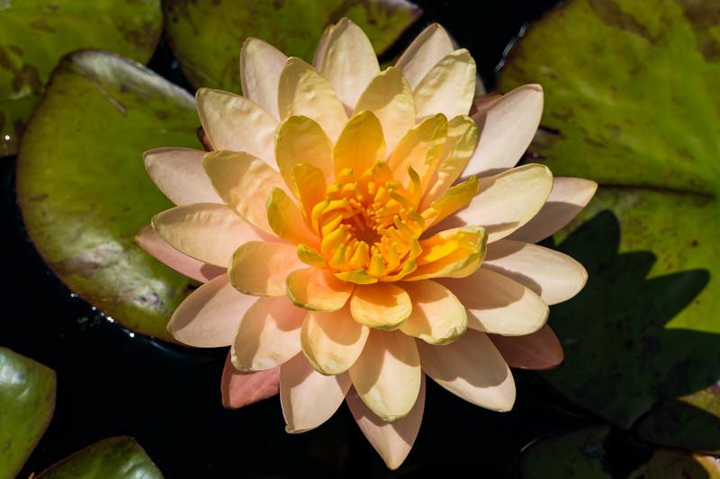 20190722_denver-botanical-garden_013.JPG