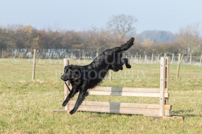 Dog Training Novice GD Feb2019-5936.jpg