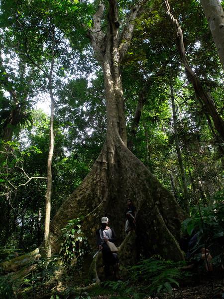 Vatthe Conservation Area, Santo