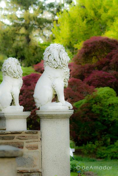 Cylburn Arboretum-aeamador-0049.jpg
