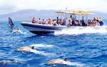 1022Maui Sub / Whale Watch Combo - Atlantis Submarine Hawaii