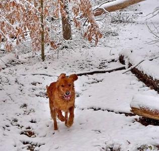 2-12-10 Snow at Cinderella Falls