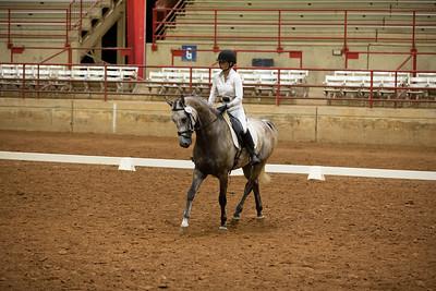Horse 200