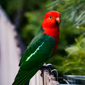 BIRDS AND CRITTERS OF AUSTRALIA