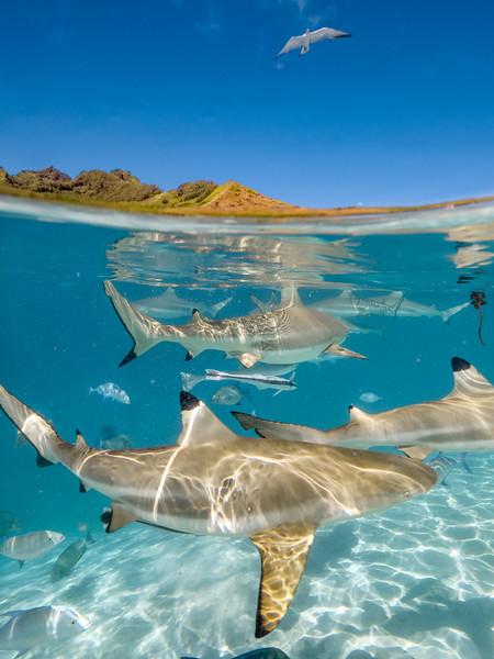 Shark 2.jpg