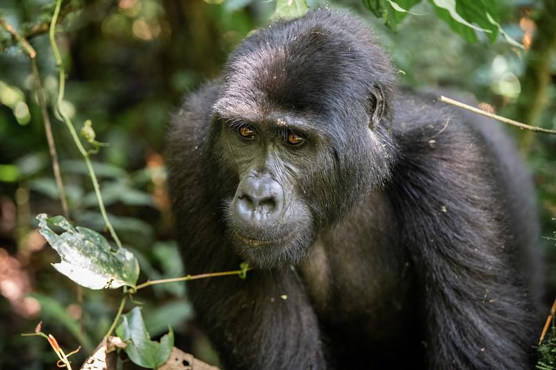 Uganda_T_Gor-384.jpg