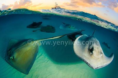 Grand Cayman - Stingray City 大開曼 - 魟魚之都