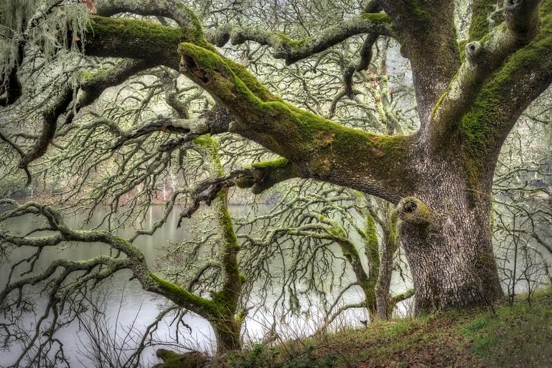 Lakeside Oaks, Sonoma Valley, California