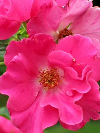 Garden September 03
