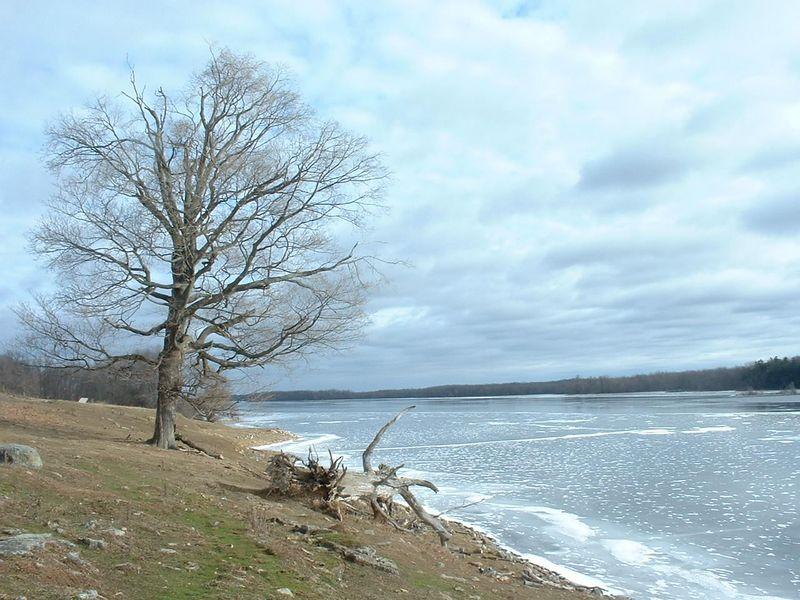 looking north on Black Lake