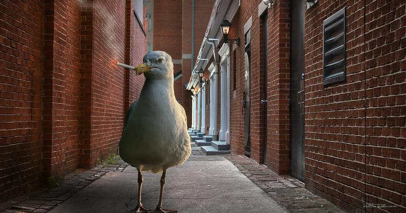 dark-seagull.jpg