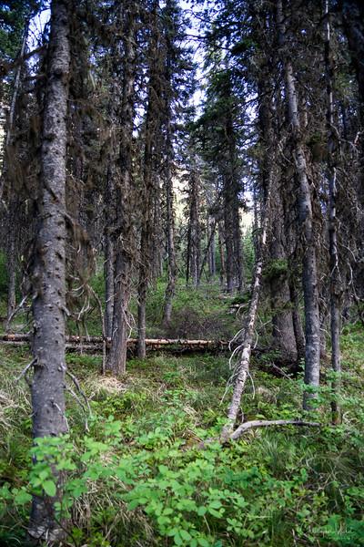 150613_grinnell_glacier_hike_lake_josephine_8939.jpg
