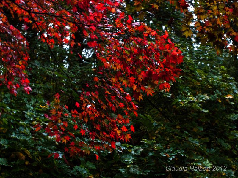 Oregon_Oct_2011-18-11.jpg
